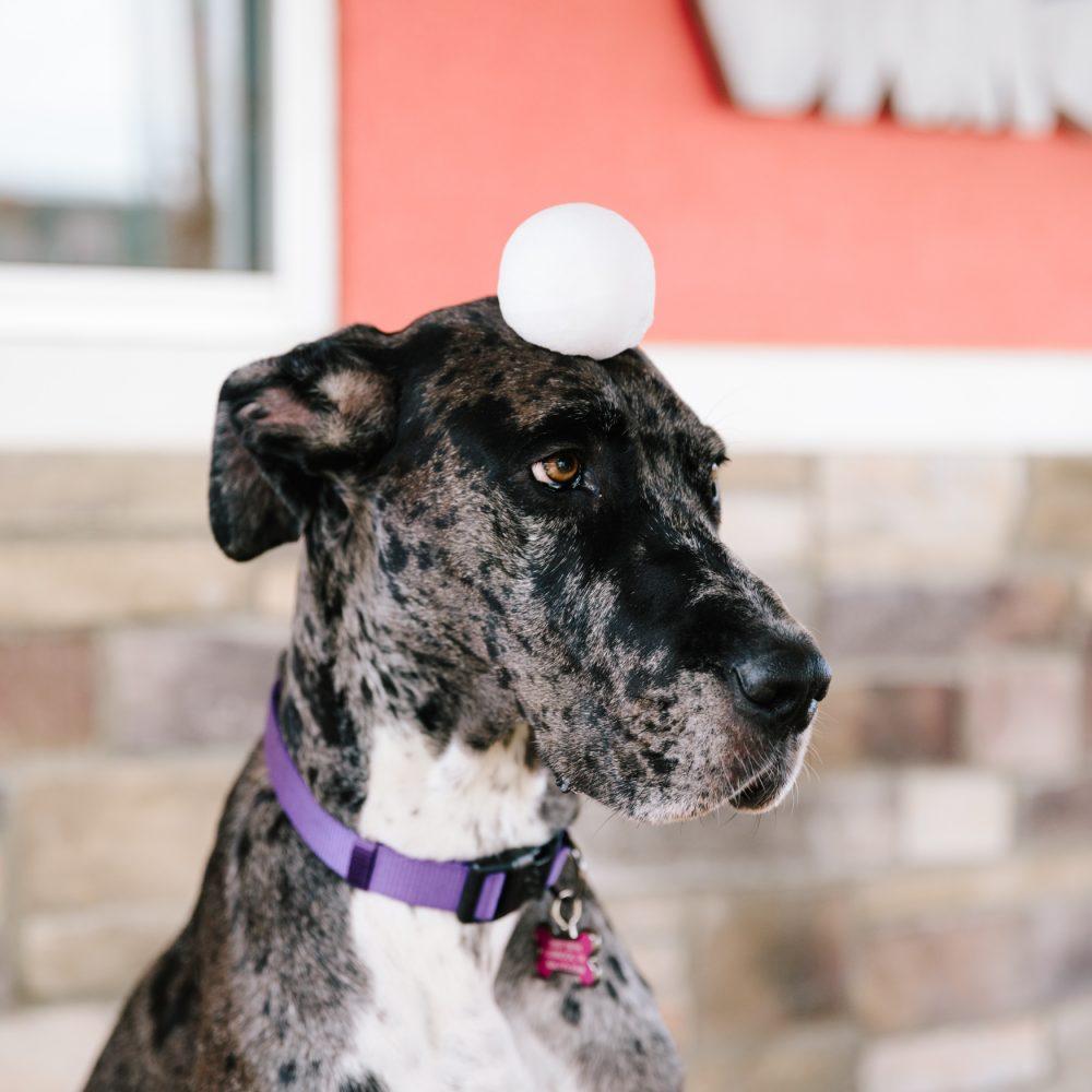 Sno2Throw-Dog